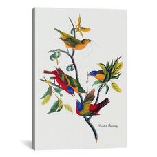 Painted Bunting by John James Audubon Gallery Wrapped Canvas Artwork - 18