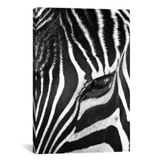 Zebra Stare by Bob Larson Gallery Wrapped Canvas Artwork